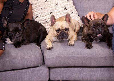 Expresso Frenchies
